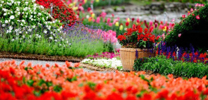 Добавьте цвета вашему саду