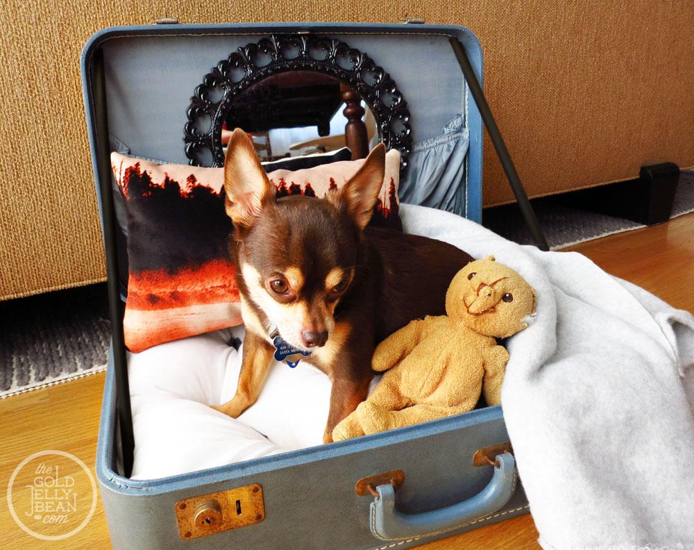 Старые чемоданы опять в деле