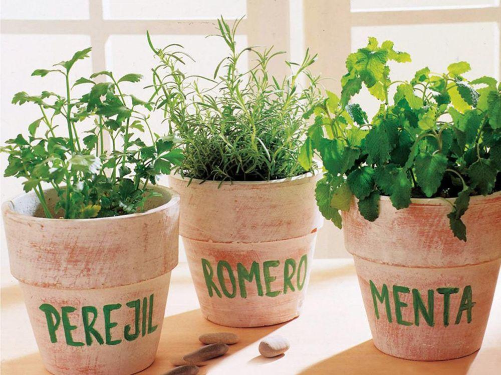 что можно выращивать дома
