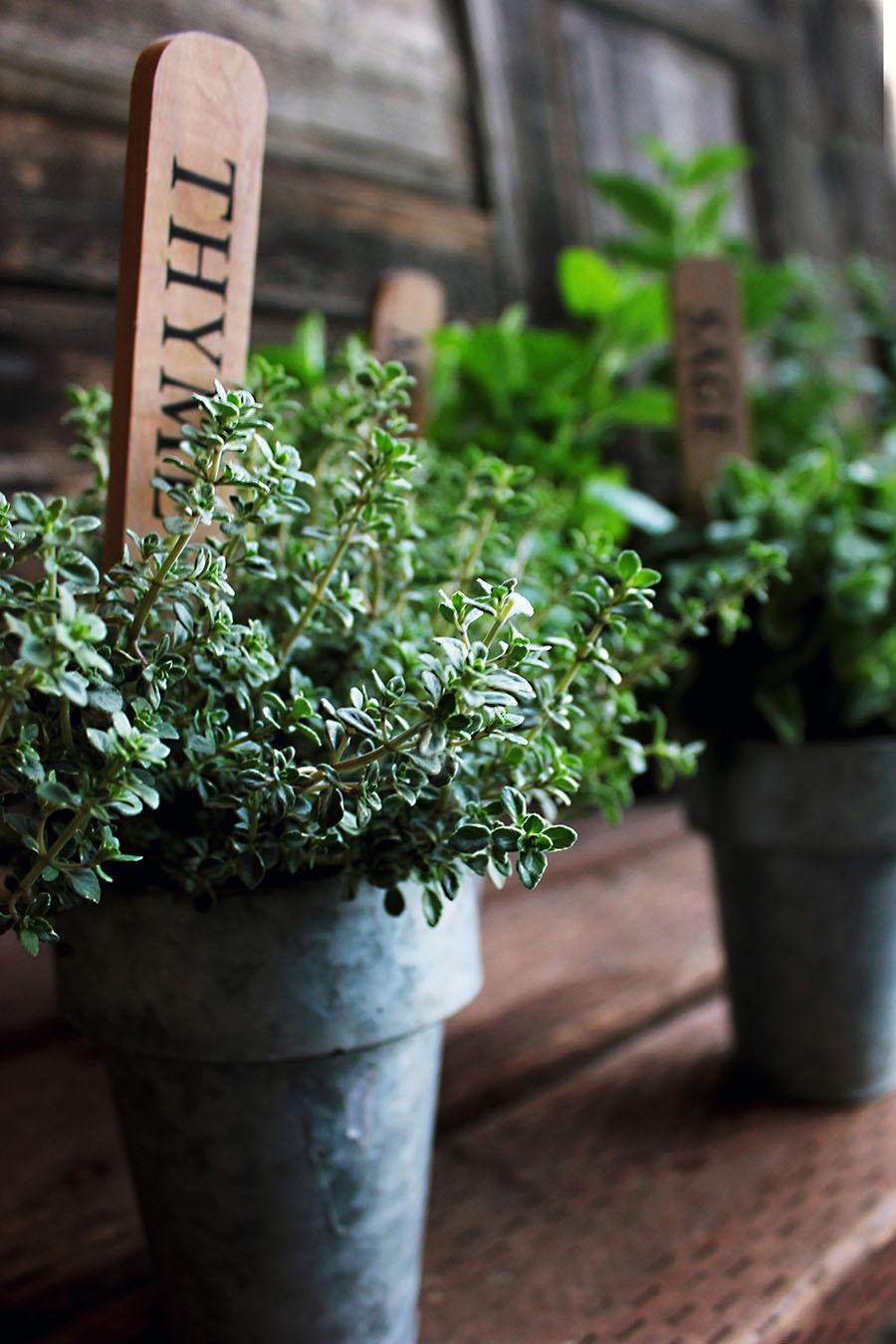 выращивать зелень дома