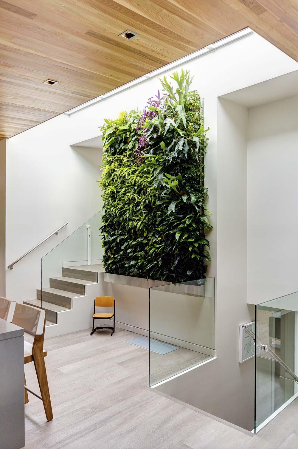 выращивание зелени дома