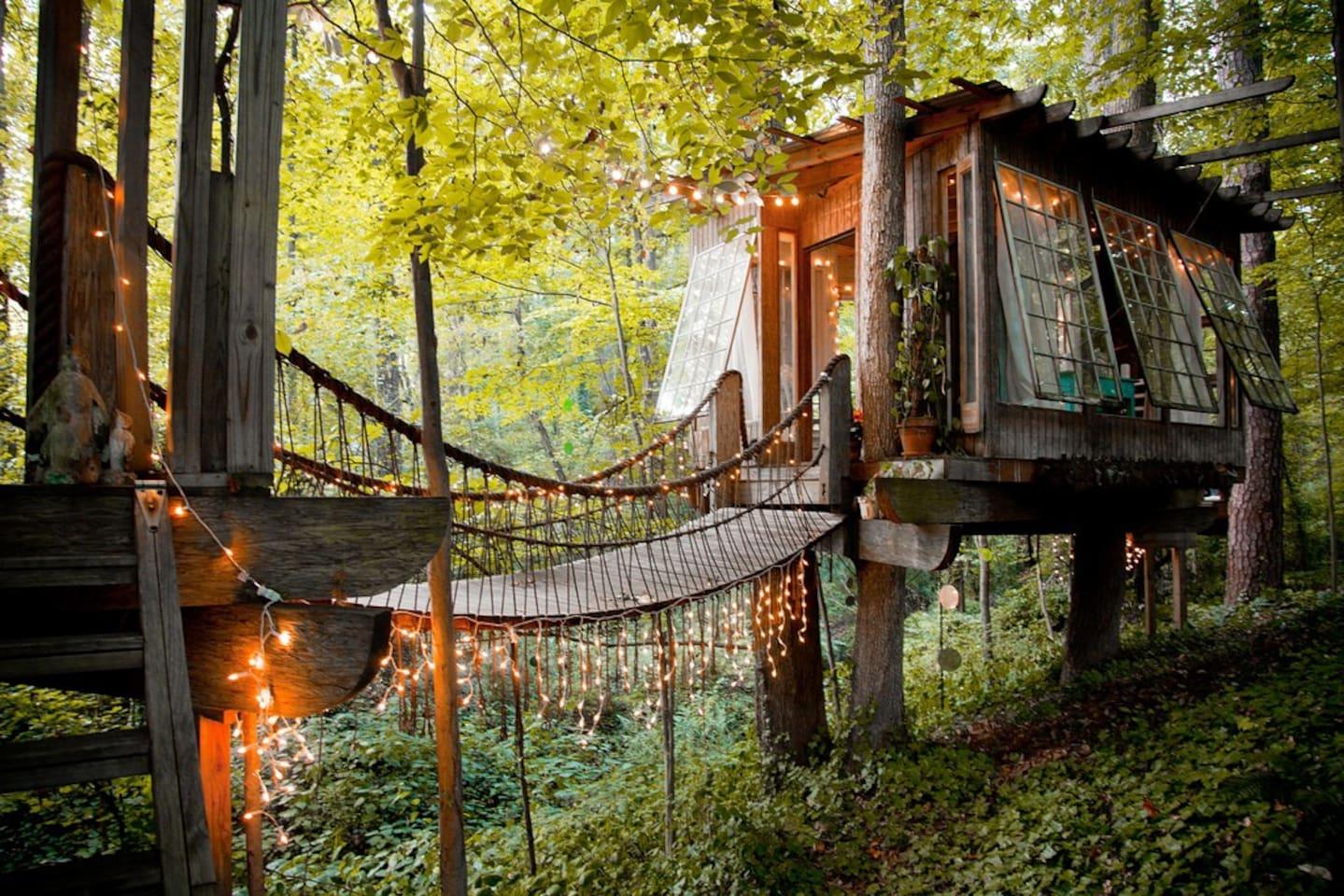 дом на дереве фото