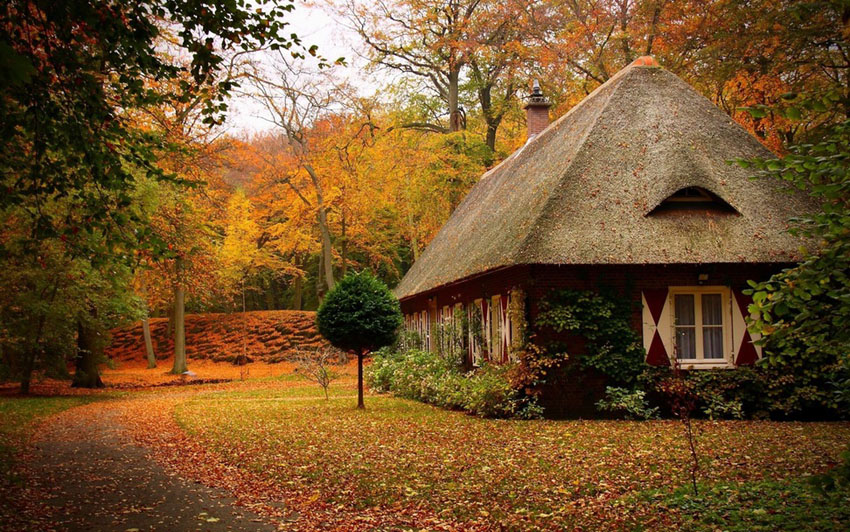 сказочный домик в лесу