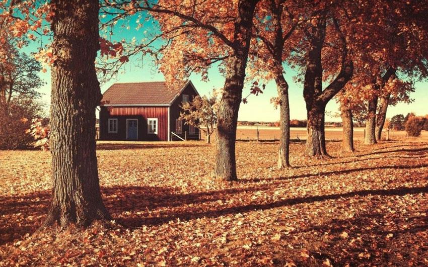 дом в лесу фото