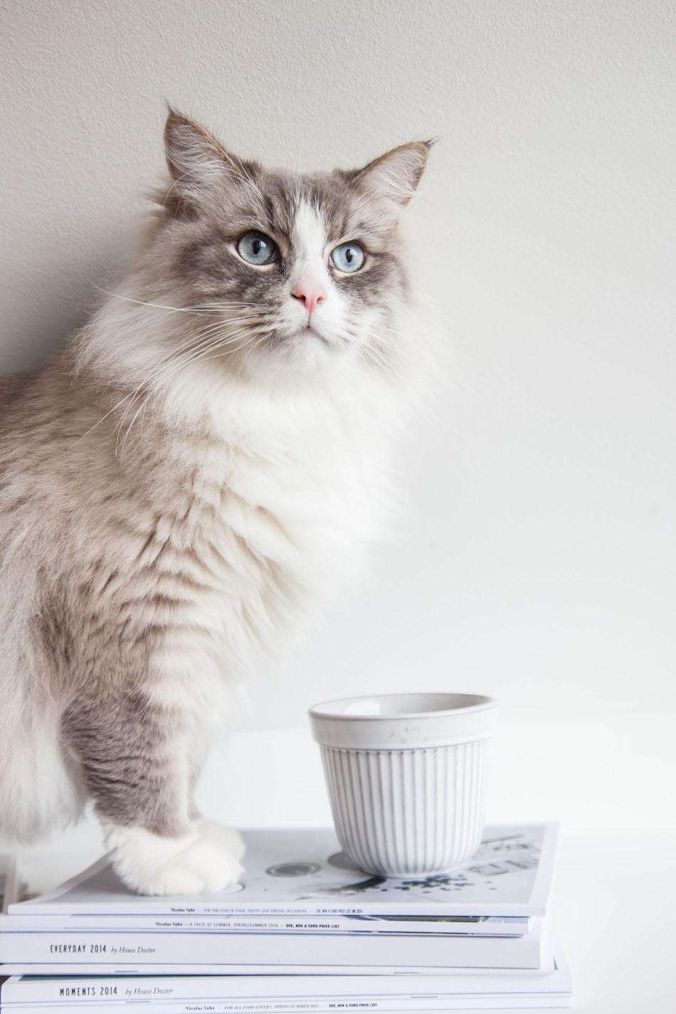 красивая кошка