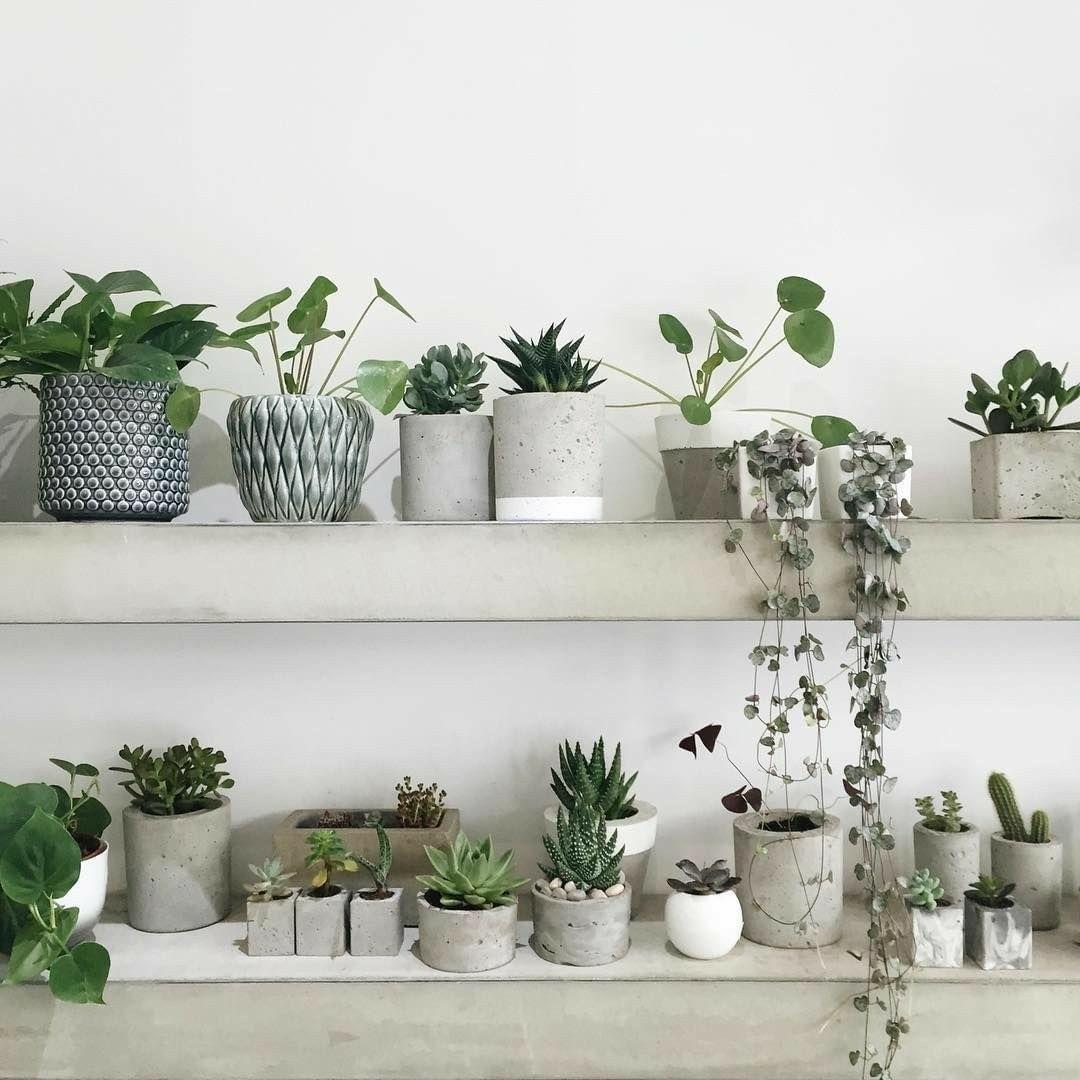 комнатные растения в интерьере квартиры фото