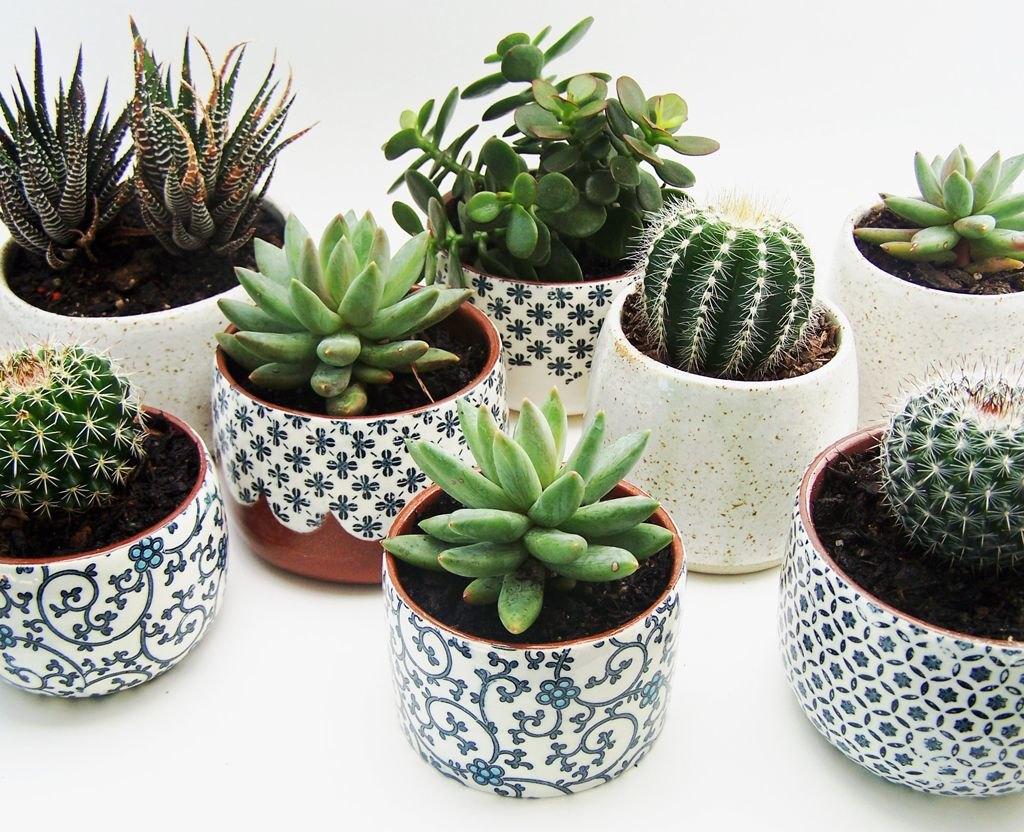 дизайн комнатных растений в квартире
