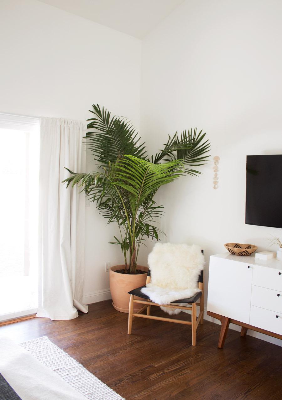 цветы в квартире фото