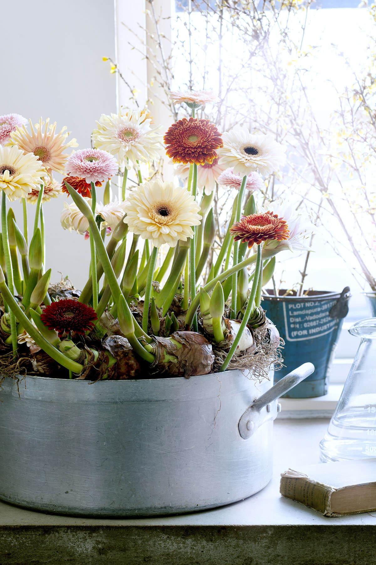 Цветы в кастрюле