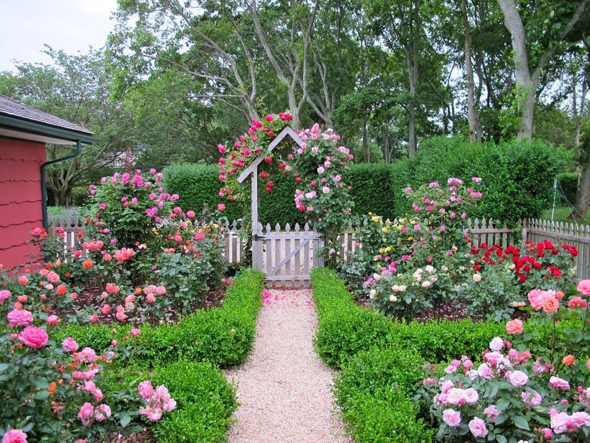 для оформление двора частного дома розами фото пяльме